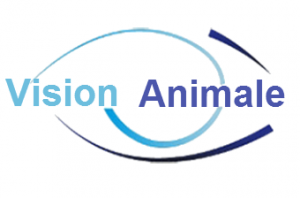 Vision Animale