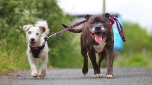 chien aveugle avec copain