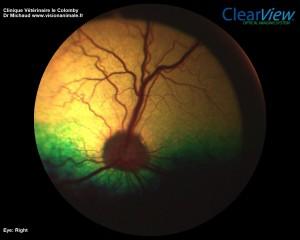 SOS Animaux - Lupita OD 151110 retino
